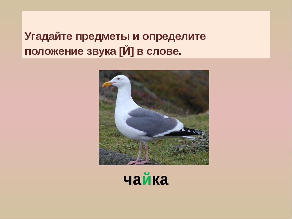 чайка Угадайте предметы и определите положение звука [Й] в слове.