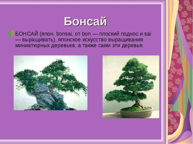 Бонсай БОНСАЙ (япон. bonsai, от bon — плоский поднос и sai — выращивать), япо...
