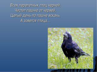 Всех перелетных птиц черней, Чистит пашню от червей, Целый день по пашне вска
