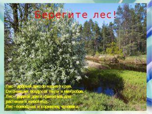 Лес – добрый доктор нашего края. Он очищает воздух от пыли и микробов. Лес –