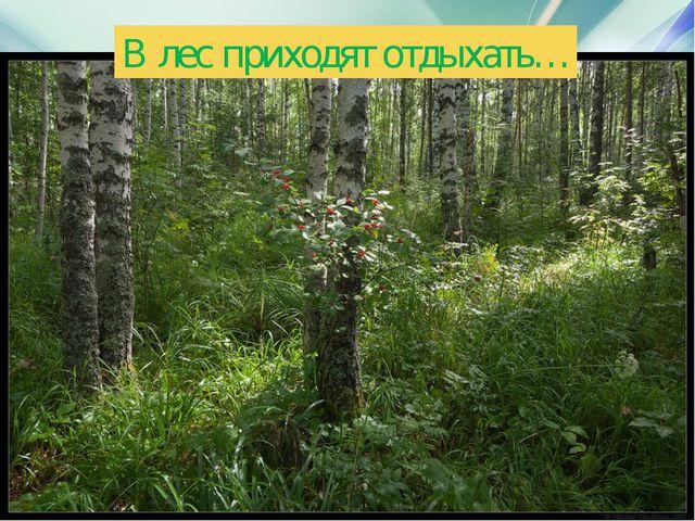 В лес приходят отдыхать…