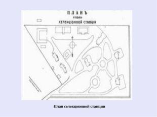 План селекционной станции