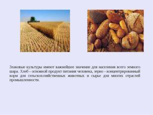 Злаковые культуры имеют важнейшее значение для населения всего земного шара.