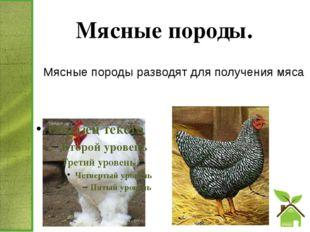 Мясные породы. Мясные породы разводят для получения мяса