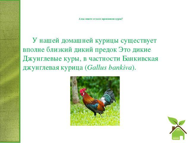 А вы знаете от кого произошли куры? У нашей домашней курицы существует впол...