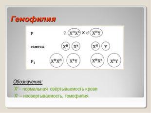 Гемофилия Обозначения: ХН – нормальная свёртываемость крови Xh – несвертываем