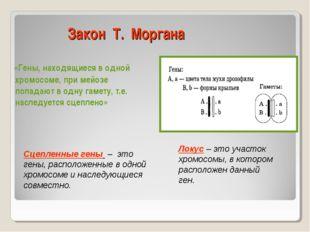 Закон Т. Моргана «Гены, находящиеся в одной хромосоме, при мейозе попадают в