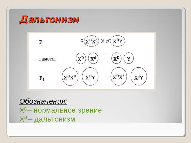 Дальтонизм Обозначения: ХD– нормальное зрение Xd – дальтонизм