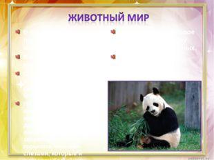 В бамбуковых лесах проживает бамбуковый медведь – панда. В Китае панда – симв