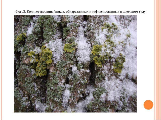 Фото3. Количество лишайников, обнаруженных и зафиксированных в школьном саду.
