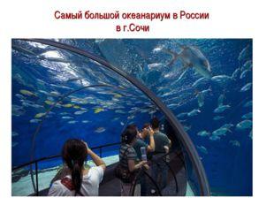 Самый большой океанариум в России в г.Сочи