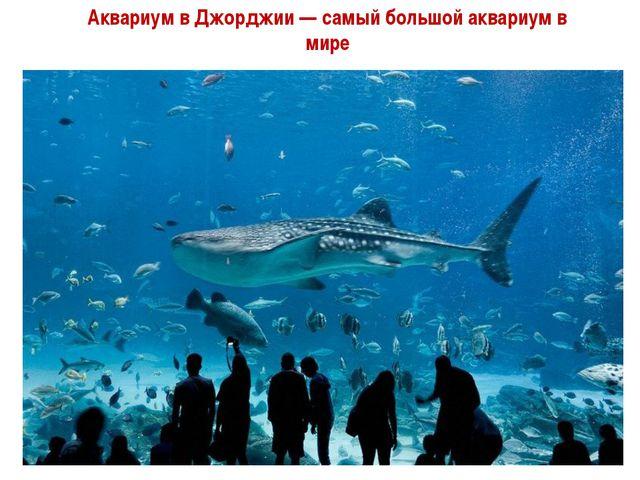 Аквариум в Джорджии — самый большой аквариум в мире