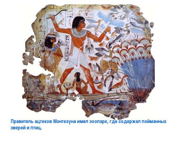 Правитель ацтеков Монтезуна имел зоопарк, где содержал пойманных зверей и птиц.