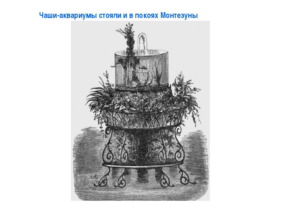 Чаши-аквариумы стояли и в покоях Монтезуны
