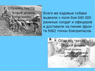 . Всего же ездовые собаки вывезли с поля боя 680 000 раненых солдат и офицер