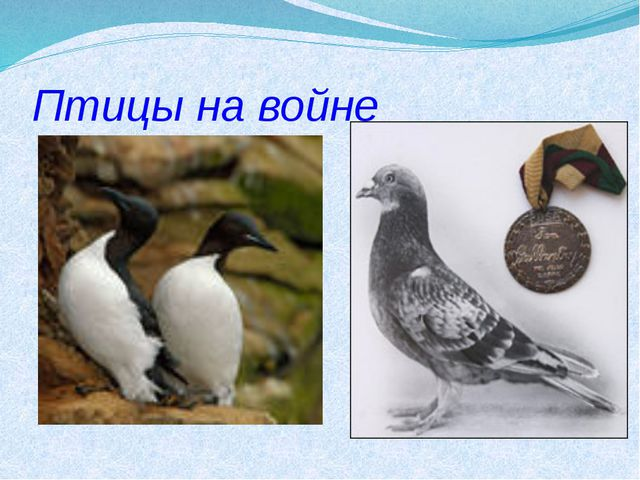 Птицы на войне