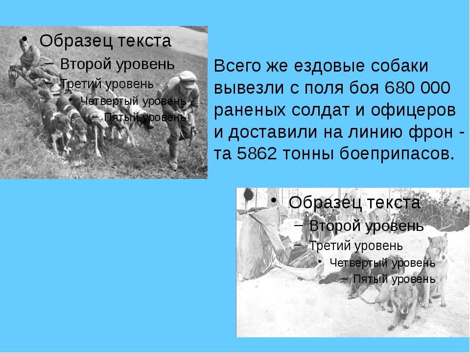 . Всего же ездовые собаки вывезли с поля боя 680 000 раненых солдат и офицер...