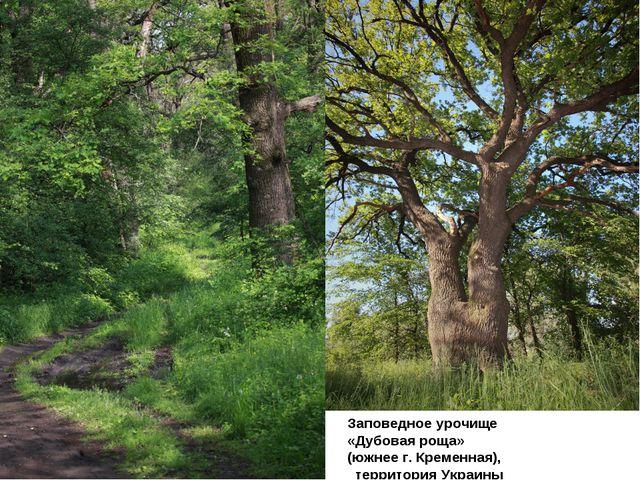 Заповедное урочище «Дубовая роща» (южнее г. Кременная), территория Украины