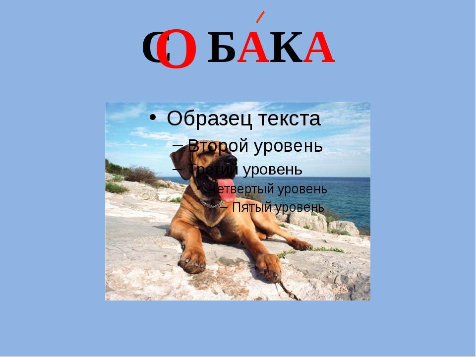 С   БАКА