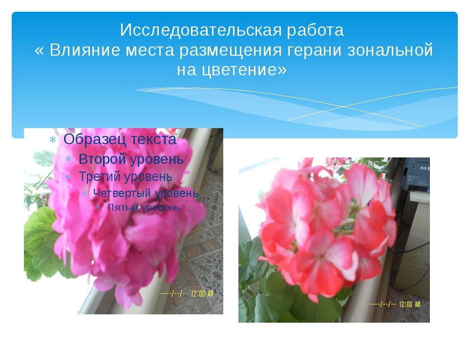 Исследовательская работа « Влияние места размещения герани зональной на цвете...