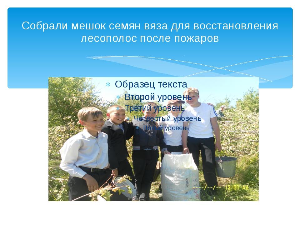 Собрали мешок семян вяза для восстановления лесополос после пожаров