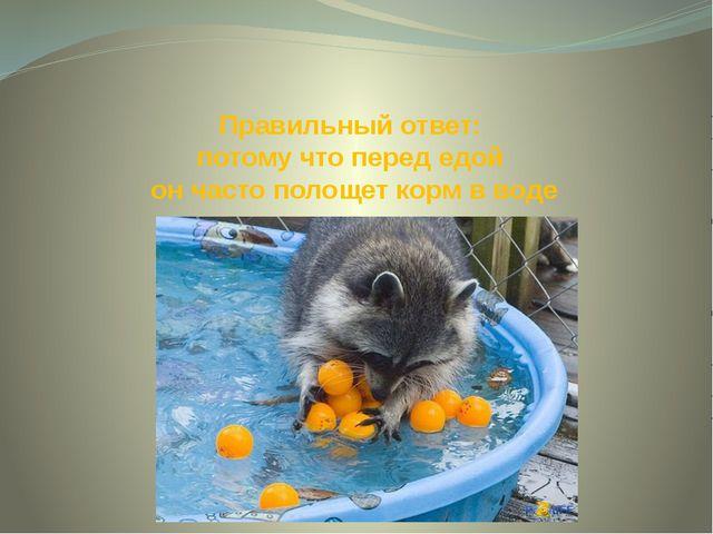 Правильный ответ: потому что перед едой он часто полощет корм в воде