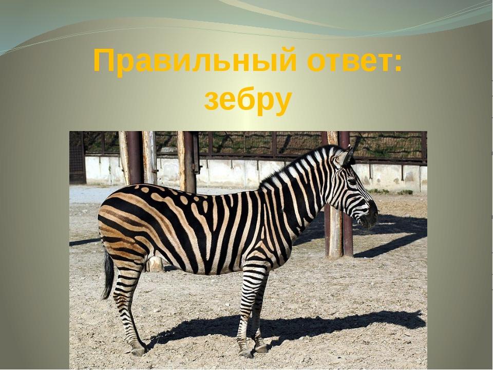 Правильный ответ: зебру