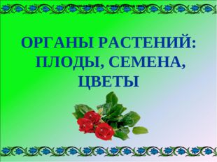 Органы растений: плоды, семена, цветы Органы растений: плоды, семена, цветы О