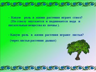 - Какую роль в жизни растения играет ствол? (По стволу опускается и поднимает