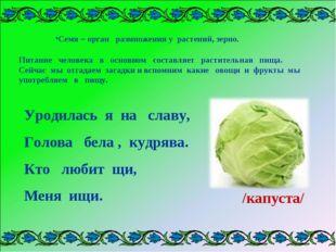 Семя – орган размножения у растений, зерно. . Питание человека в основном сос