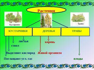 Растения КУСТАРНИКИ ДЕРЕВЬЯ ТРАВЫ листья ствол Выделяют кислород Поглащают уг