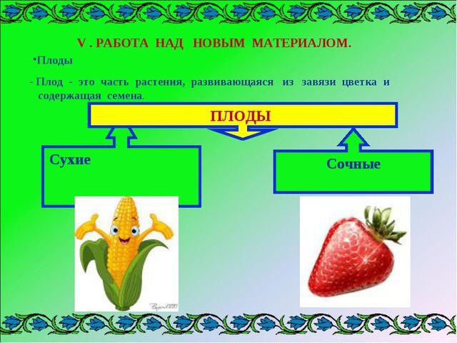 - Плод - это часть растения, развивающаяся из завязи цветка и содержащая семе...