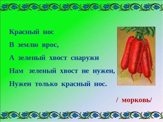 Красный нос В землю врос, А зеленый хвост снаружи Нам зеленый хвост не нужен...