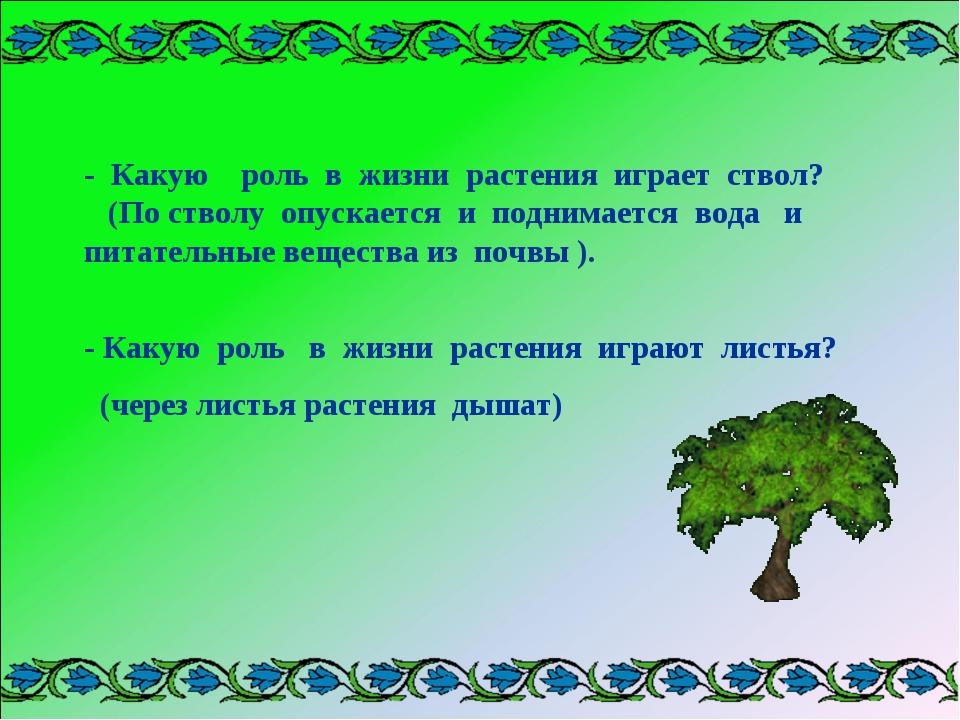 - Какую роль в жизни растения играет ствол? (По стволу опускается и поднимает...
