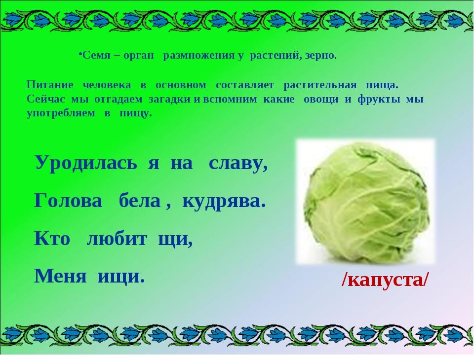 Семя – орган размножения у растений, зерно. . Питание человека в основном сос...