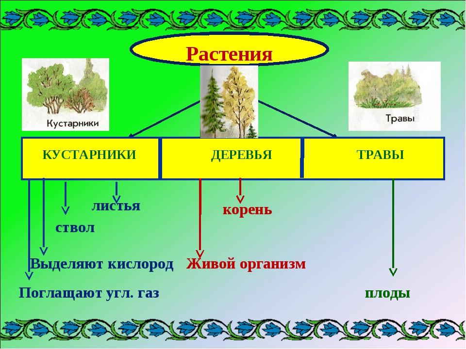 Растения КУСТАРНИКИ ДЕРЕВЬЯ ТРАВЫ листья ствол Выделяют кислород Поглащают уг...
