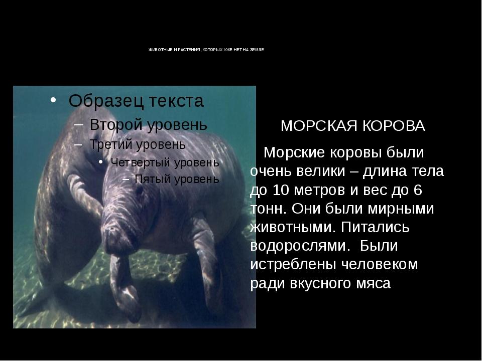 ЖИВОТНЫЕ И РАСТЕНИЯ, КОТОРЫХ УЖЕ НЕТ НА ЗЕМЛЕ РАСТЕНИЯ, КОТОРЫХ УЖЕЖИВО...