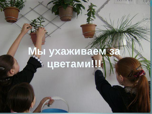 Мы ухаживаем за цветами!!!