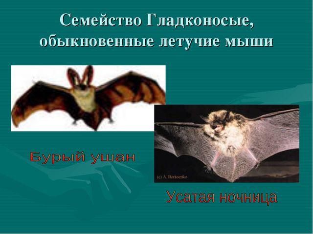 Семейство Гладконосые, обыкновенные летучие мыши