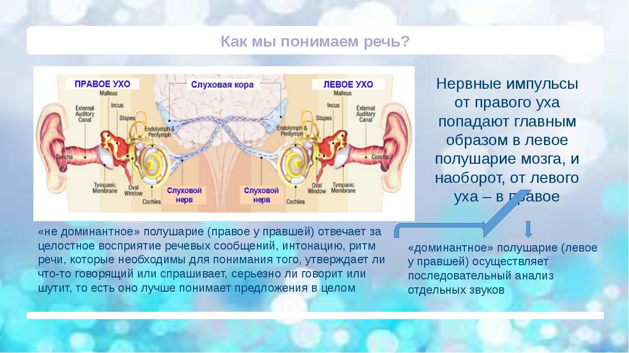 Как мы понимаем речь? «доминантное» полушарие (левое у правшей) осуществляет...