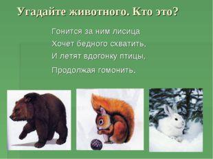 Угадайте животного. Кто это? Гонится за ним лисица Хочет бедного схватить, И