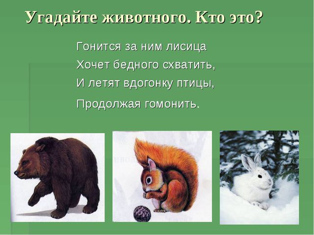 Угадайте животного. Кто это? Гонится за ним лисица Хочет бедного схватить, И...