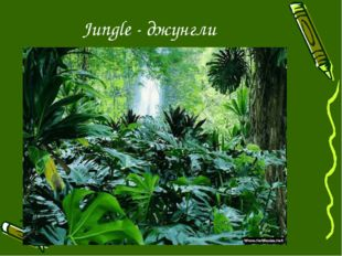 Jungle - джунгли