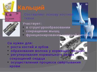 Кальций Составляет основу костной ткани Участвует: в структурообразовании сок