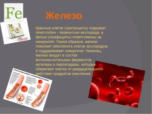 Железо Красные клетки (эритроциты) содержат гемоглобин - переносчик кислорода