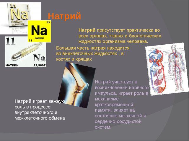 Натрий Натрий присутствует практически во всех органах, тканях и биологически...