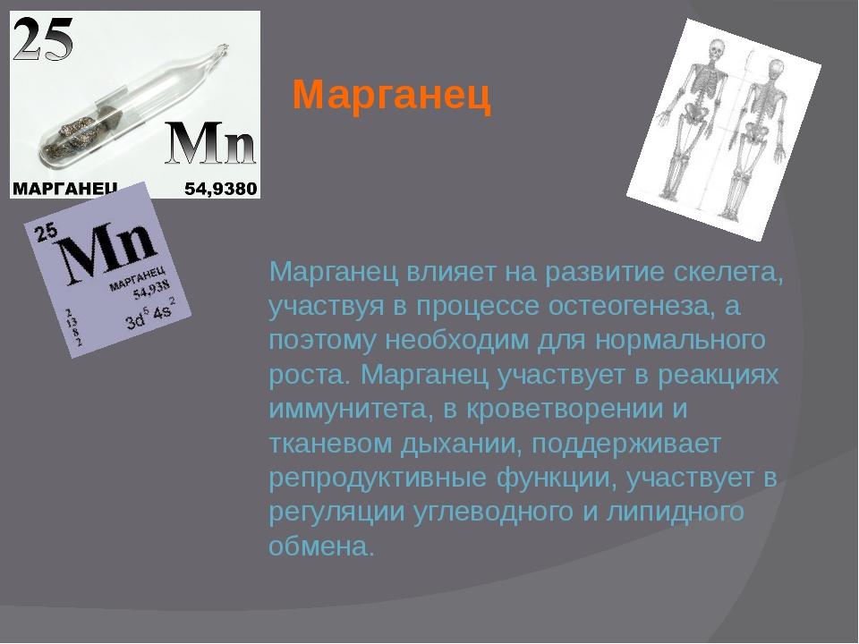 Марганец Марганец влияет на развитие скелета, участвуя в процессе остеогенеза...