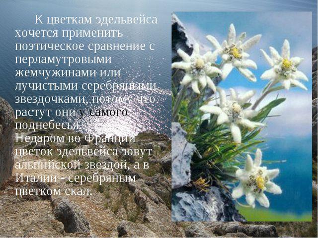 К цветкам эдельвейса хочется применить поэтическое сравнение с перламутровым...