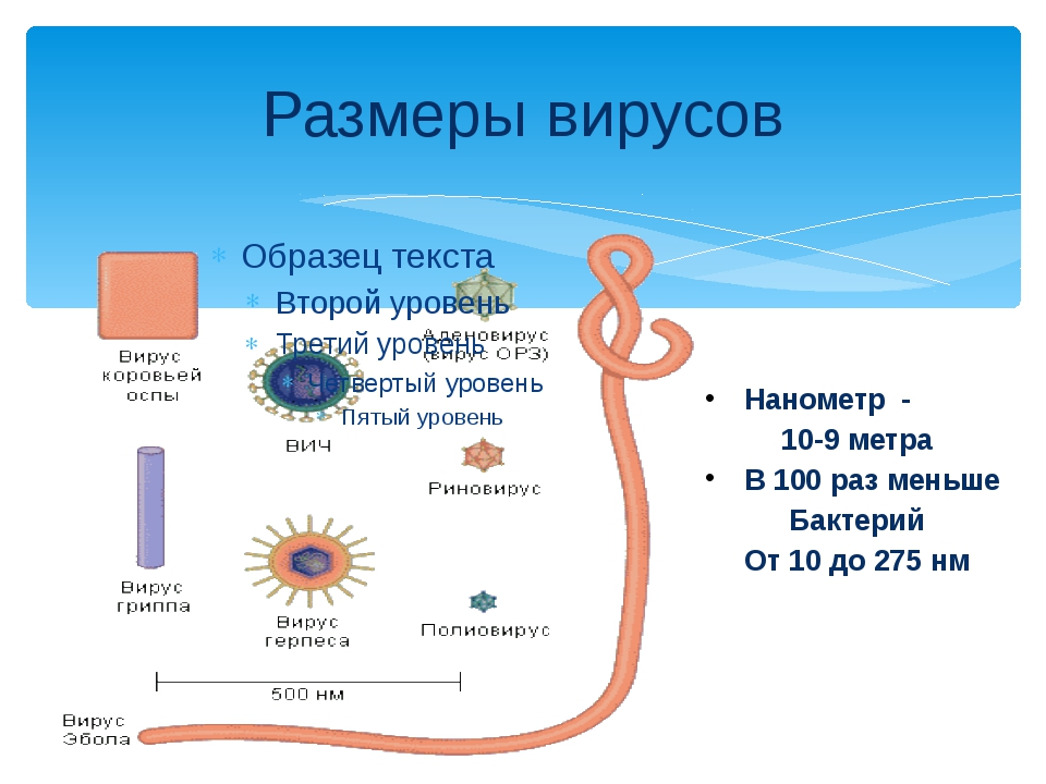Размеры вирусов Нанометр - 10-9 метра В 100 раз меньше Бактерий От 10 до 275 нм