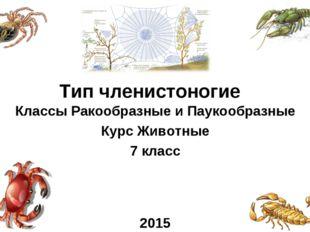 Классы Ракообразные и Паукообразные Курс Животные 7 класс 2015 Тип членистоно
